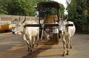 Bullock cart, Chettinad copy