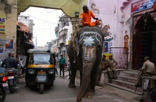 Elephant, Bundi copy