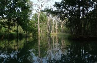 Panna National Park  copy